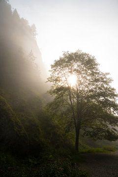 Nebliger Morgen in den Bergen von Elles van der Veen