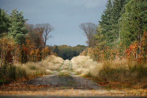 Herfst laan Veluwe