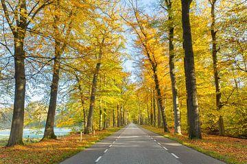 Straße durch den Wald mit Bäumen im Herbst von Ben Schonewille