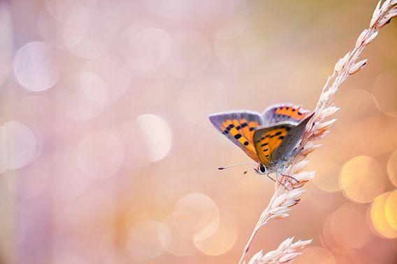 Kleine vuurvlinder vlinder met mooie achtergrond