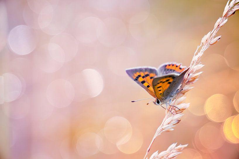 Kleine vuurvlinder vlinder met mooie achtergrond van Mark Scheper