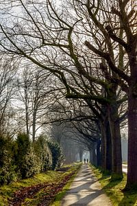Wandelen in de winterzon op een fietspad bij Eindhoven van