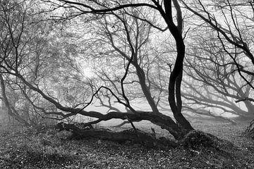 Baum und Äste im Nebel von Heiko Westphalen