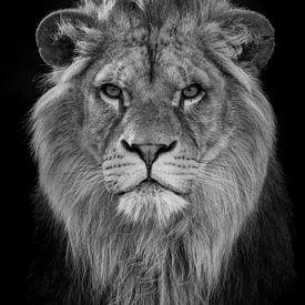 Toekomstige leeuwenkoningin van Tazi Brown