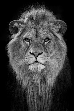 Toekomstige leeuwenkoningin