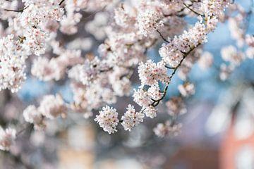 White blossom von Patrick Verheij