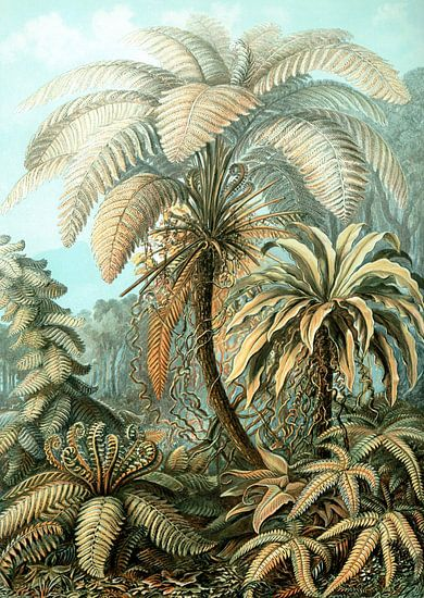 Haeckel Filicinae