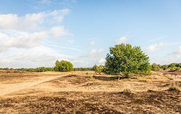 Niederländischer Nationalpark Loonse en Drunense Duinen von Ruud Morijn