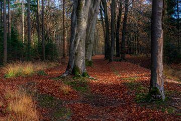Herfst in het Sterrenbos in Gorssel. van Bart Ros