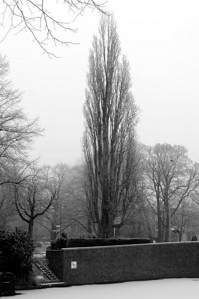 Noorderplantsoen in de Winter 2 van Ronald Hulsebos