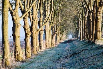 Tunnel van bomen  van René Groenendijk