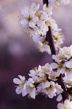 Vertikale Blüte von Joran Quinten