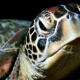 Tortue de mer (tortue verte) sur Alexander Schulz