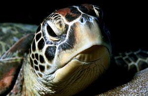 Zeeschildpad (groene schildpad) van Alexander Schulz