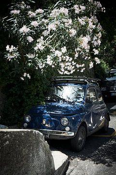 Fiat 500 begraben von Oleander von Karel Ham