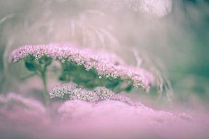 fleurs partie 214 sur Tania Perneel