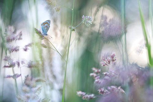Dromen met bloeiende grassen van