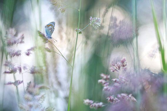 Dromen met bloeiende grassen van Teuni's Dreams of Reality