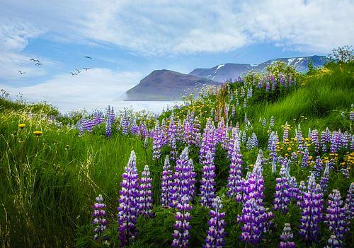 Zicht op het fjord met lupine op de voorgrond, IJsland