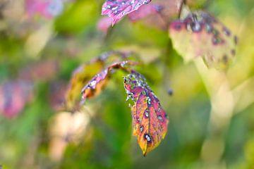 Najaar in groen en paars van Marianna Pobedimova
