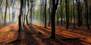 Speulderbos (Nederland) van