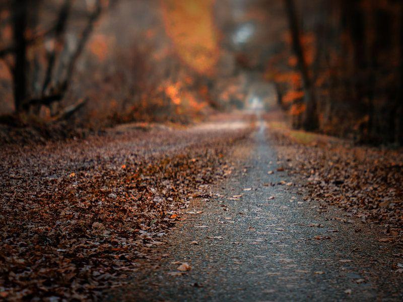 Autumn road van Lex Schulte