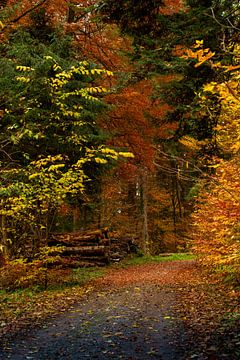 Walk through the colorful forest in autumn. van Stefan Heesch
