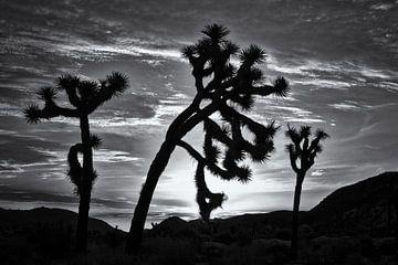 Joshua Tree 02 von Peter Bongers
