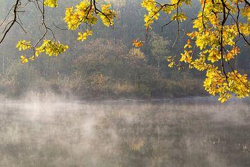 Herbstfarben an einem See im Wald