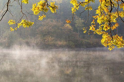 Herfstkleuren  bij een meertje in het bos van