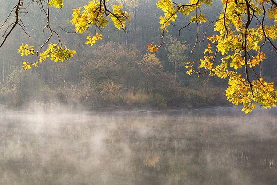 Herfstkleuren  bij een meertje in het bos