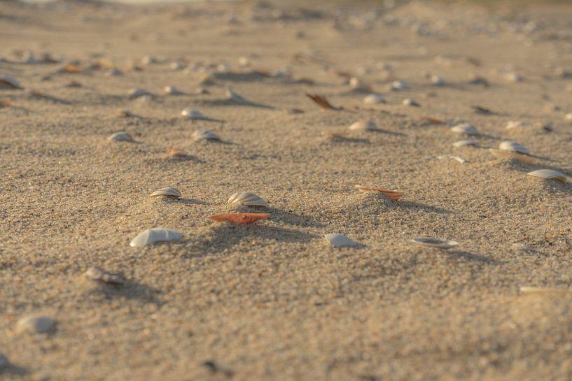 Schelpen op het strand van Leo Luijten
