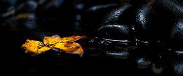 Goud blad in zwart water van Sense Photography