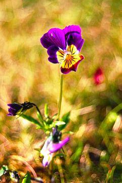 Violett-Violett von Tineke Visscher