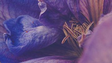 Abstract detail van een clematis van ElkeS Fotografie