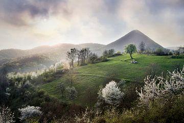 Zumberak-Schönheit von René Pronk