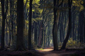 Mystiek bos van Martin Podt