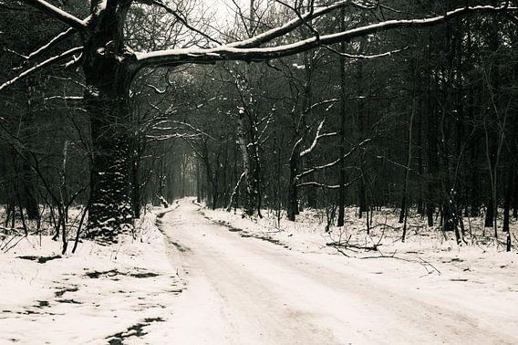 Sneeuw in het bos