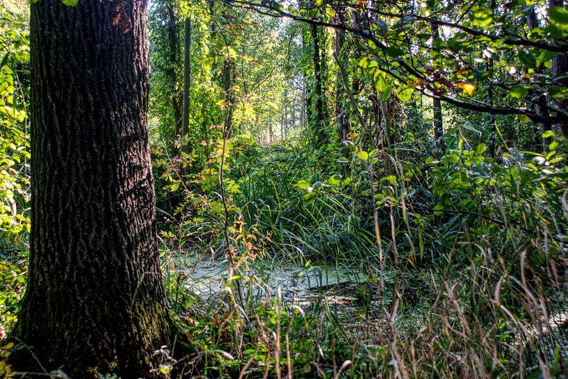 Märchenwald, Wald von BDG pics