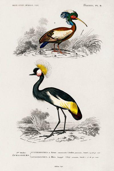 Verschillende soorten vogels van Heinz Bucher