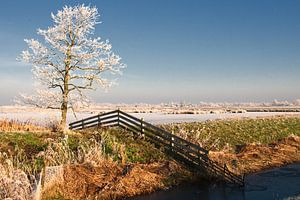 Winter in Friesland van