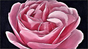 Golvende Roze Leonardo da Vinci Roos - Schilderij