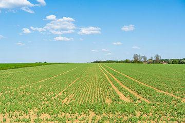 Lente landbouw van Achim Prill