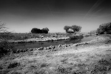 Natuur en cultuur in de Biesbosch van Peter Baak
