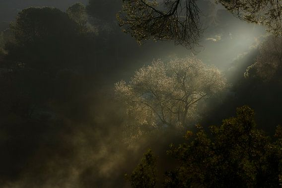 De eerste zonnestralen, boom en nevel