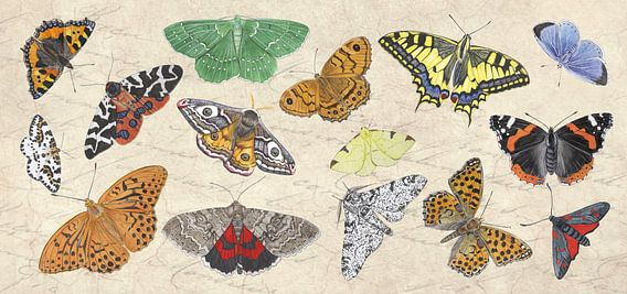 Dagvlinders en nachtvlinder