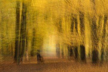 Herbst von Ingrid Van Damme fotografie