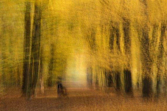 Herfst van Vandain Fotografie