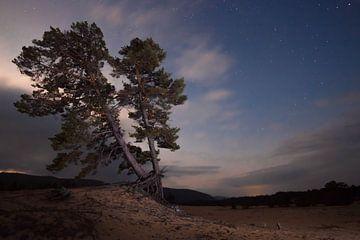 Cloudy sternenklaren Dämmerung si alte Kiefer auf dem Sand in der sibirischen Taiga in der Nähe von  von Michael Semenov