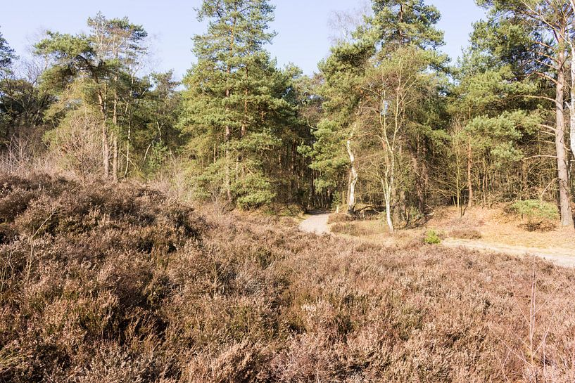 Paadje in bos bij Lage Vuursche van Jaap Mulder